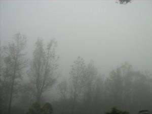Mist on the way to Baba-Budangiri Hills