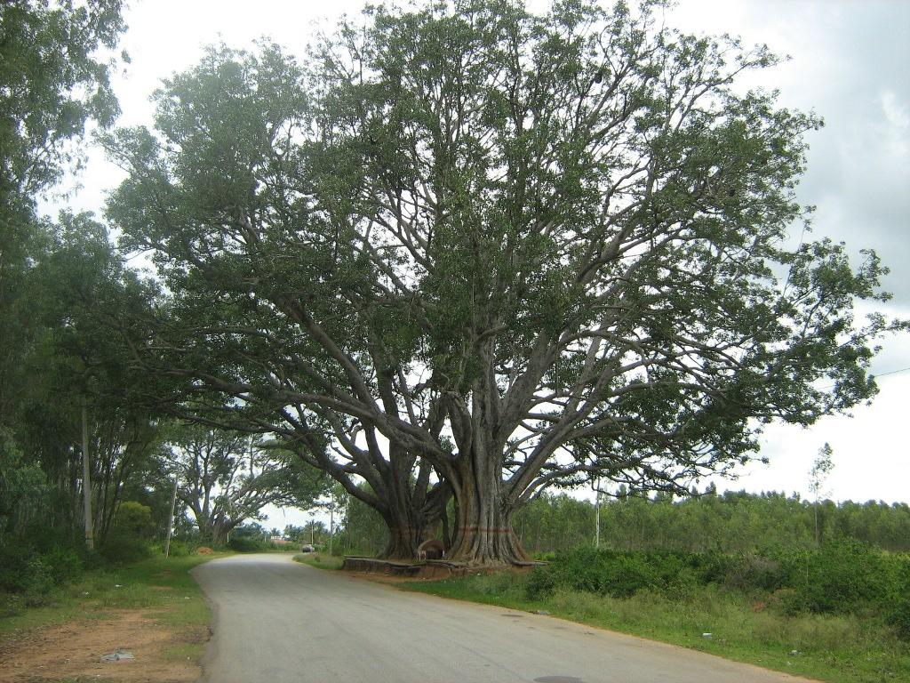 Road to Chikka Tirupati