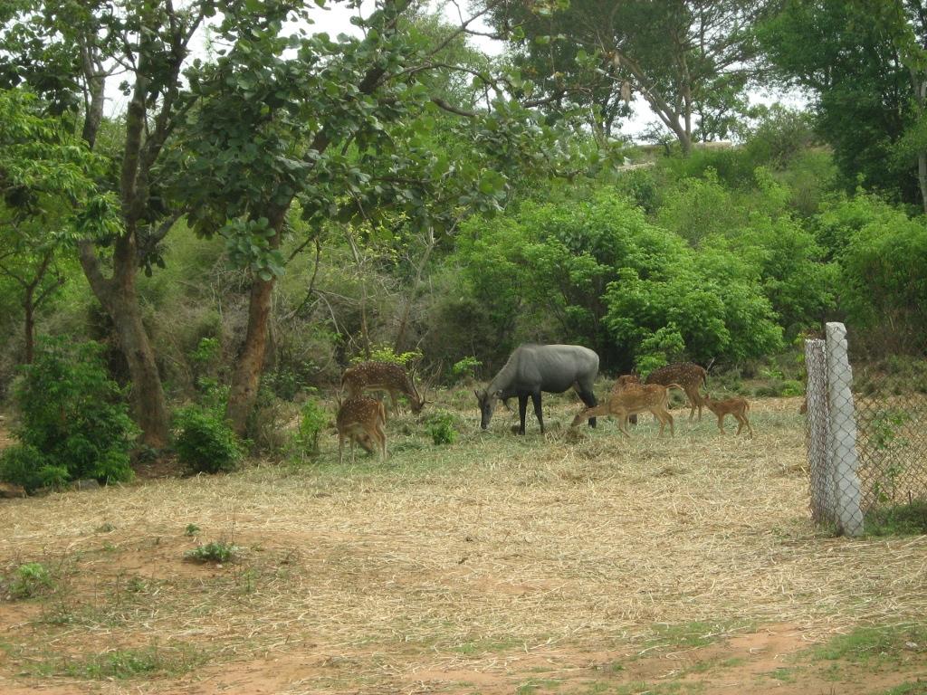 Deers feeding inside the park