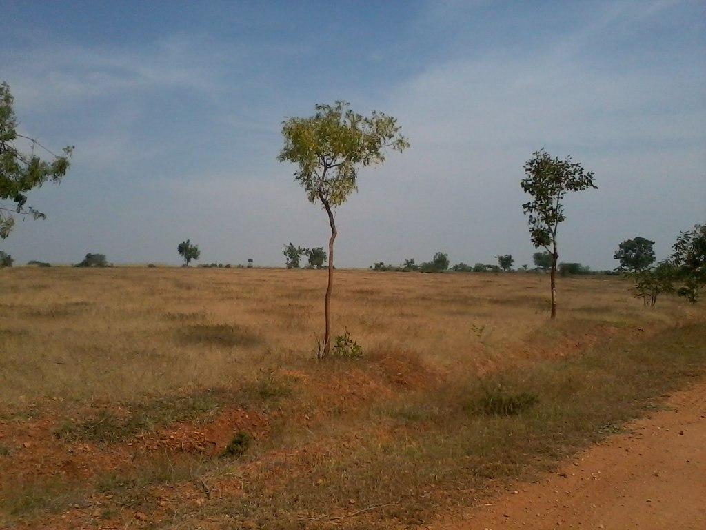 Open Grasslands at the Jayamangali Black Buck Santurary