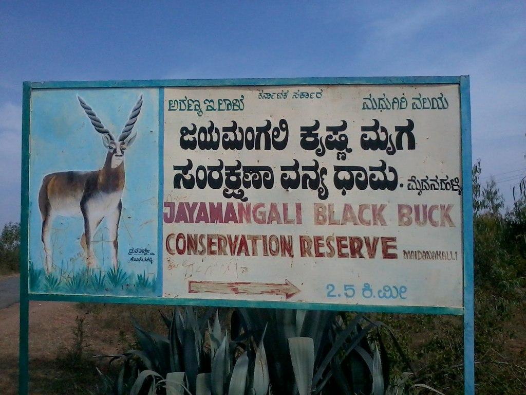 Way to Jayamangali Black Buck Santurary